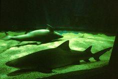 Visite en famille : le Seaquarium du Grau du Roi - Port Camargue. Lire le témoignage et voir la vidéo ici : http://www.sortie-famille-gard.com/seaquarium-grau-du-roi/