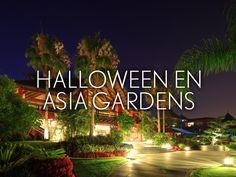 Escápate en Halloween a nuestro paraíso asiático y disfruta de unos días inolvidables en familia… Tenemos preparado un programa muy especial para los más pequeños