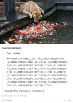 Funny Animals Source by bluesixty dog dog memes dog videos videos wallpaper dog memes dog quotes dogs dogs pictures dogs videos puppies puppy video Humor Animal, Funny Animal Memes, Cute Funny Animals, Funny Animal Pictures, Cute Baby Animals, Funny Dogs, Animals And Pets, Cute Dogs, Dog Memes