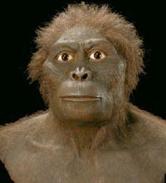 australopithecus bahrelghazali -Australopithecus bahrelghazali es un homínido fósil que fue descubierto por primera vez en 1993  por el paleontólogo Michel Brunet en el valle de Bahr el Ghazal, cerca de Koro Toro, en el Chad, que Brunet nombrado Abel. Esta especie es un misterio para algunos, ya que es el único fósil australopitecino encontrado en África Central.