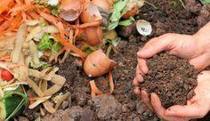Se avete un orto, riciclare i rifiuti organici vi permetterà di creare un compost ecologico e di qualità che porterà benessere all'ambiente e alle piante