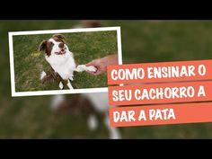 Como Ensinar o Cachorro a Dar a Pata | Meu Cão Companheiro - YouTube