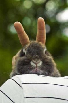 Awww giving bunny ears to a bunny