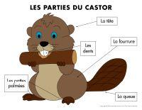 Poni découvre et présente-Les castors-1