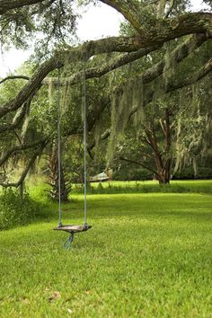Tree Swing | Tree Swing Hanging Under Live Oak With Spanish Moss