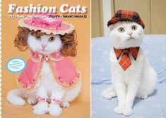 fashion cats | Blog | Fumiko Kawa
