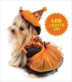 Witch Dog Costume Orange/Black with LED