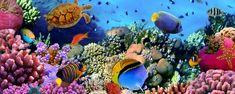 Marine fytoplankton; basis van alle leven én volop energie