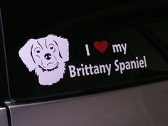 Brittany Spaniels are the BEST!