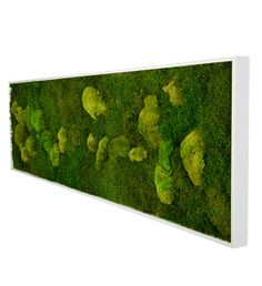Moosbild 140 x 40cm | Greenbop Online Shop