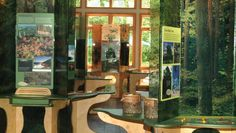 Overall view of A Forest Journey traveling exhibit at the Franklin Institute.