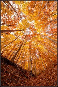 Autumn in the woods (Rhodope Mtns, Bulgaria ) Pretty Pictures, Cool Photos, Belle Photo, Beautiful World, Wonders Of The World, Nature Photography, Scenery, Fall Trees, Fall Leaves