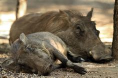 After a busy day - Eden Safari Country House Wild Life, Safari, Country, House, Animals, Animales, Rural Area, Home, Animaux