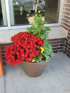 A fall planter by Barrett Lawn Care including red #mums, #pansies, and #kale.