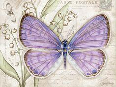 Lang Wallpaper   May 2015   Butterflies