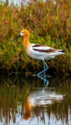 Most Beautiful Birds, Beautiful Fish, Animals Beautiful, Cute Birds, Pretty Birds, All Gods Creatures, Sea Creatures, Animals And Pets, Cute Animals