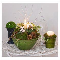 Gorgeous arrangement with moss, pinecones and cyclamen