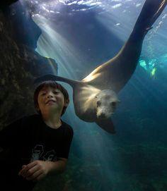 Sea lion and 5-year-old form friendship through aquarium glass