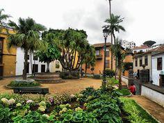 Icod+de+los+Vinos+(Tenerife,+España)