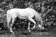 Nuevalos.Horse by Ismael Embid on 500px
