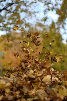 """""""and the leaves were telling secrets to the wind. October Country, Blowin' In The Wind, Autumn Rain, Blown Away, Windy Day, Four Seasons, Mother Earth, Mood, Nature"""