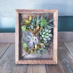 Succulent vertical gardens designed in these wonderful barn wood style vintage style wood frames. Each one will vary depending upon what plants are