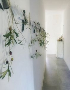 plants + wall space