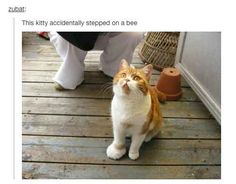 When this cat stepped on a bee.
