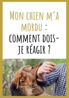Mon chien m'a mordu : comment dois-je réagir ? Dressage, Basset Hound, Rio, Attention, Pets, Movie Posters, Patience, Belgian Malinois Puppies, Dog Body Language