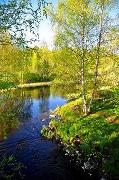Parkkuu  Finlande