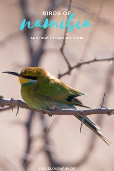 Bienenfresser, Toko, Habicht - wir geben einen Einblick in Namibias Vogelwelt und verraten euch, wie die Aufnahmen entstanden sind
