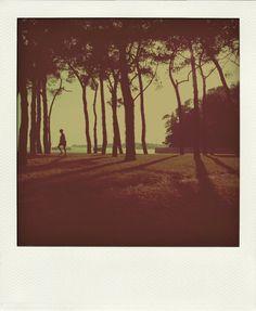 sunlight in a park in Venice