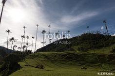 Wanderlust in Colombia's Valle de Cocora