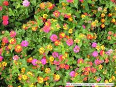 Lantana. spreads beautiful color and seems to be hardy enough to grow anywhere. I want to add some this year, just need to decide on a color.