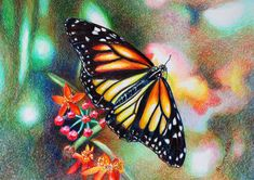 Veronica Winters - Butterfly (Colored Pencil)