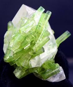82 Gram Natural Tourmaline Crystals on Undamaged Quartz Aesthetic Specimen Minerals And Gemstones, Crystals Minerals, Rocks And Minerals, Crystals And Gemstones, Stones And Crystals, Crystal Aesthetic, Quartz Geode, Mineral Stone, Rocks And Gems