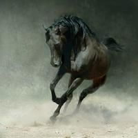 Arabian horses are considered the most beautiful and powerful of all.  Exceptional photo of one kicking up a storm.