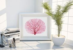 Red Fan Coral Watercolor Print