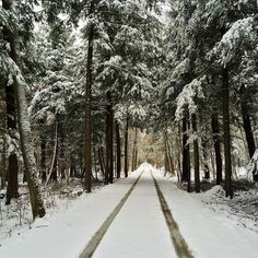 Into the woods.  #winter #hiver #zima #snow #neige #snih #snieg #schnee #forest #wood #foret #sthyacinthe #quebec #qc #canada #tree #arbre #baum #tracks #nofilter #home My collection of cool/interesting/inspirational artwork and photography from net