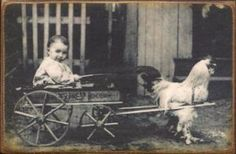 Often travelling photographers would have goat, pony, or even rooster carts for children to sit in while getting their photo taken.