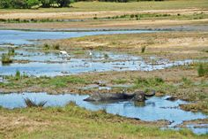 Safari-eventyr i Kumala Nasjonalpark på Sri Lanka - Norske reiseblogger