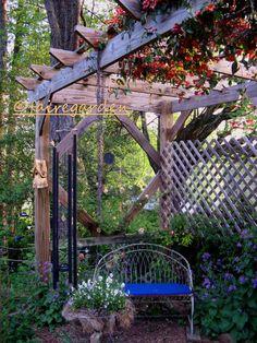 Crossvine, Bignonia 'Tangerine Beauty' on arbor.