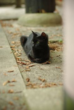 Beautiful black cat. Theincensewoman