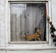 Cats in the window.