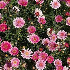 Flores que crecen rápido en nuestro jardín.