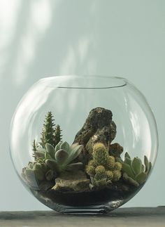 72 Best Create Your Own Terrarium Images Miniature Gardens
