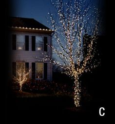 Christmas Décor of Ottawa   Lighting Sample for a Trunk and Branch Wrap
