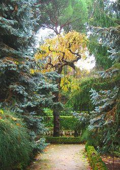 SPAIN: Madrid. Hot. (Photo: Royal Botanical Garden, Madrid.)