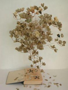 Sertum Orchidaceum
