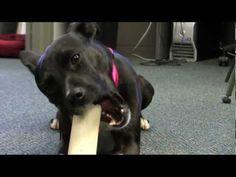 Dog Brain Scan Study Shows Mind Of Man's Best Friend, fMRI Scientists Say (VIDEO)